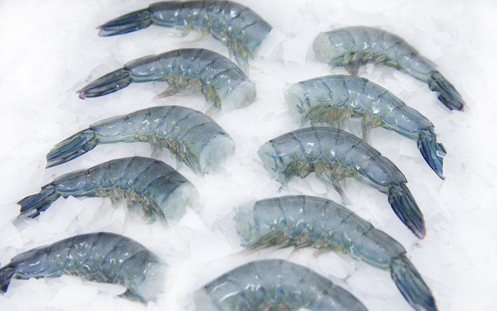 golden corporation sdn bhd product blue shrimp headless